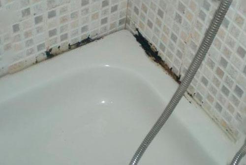 Цвіль у ванній